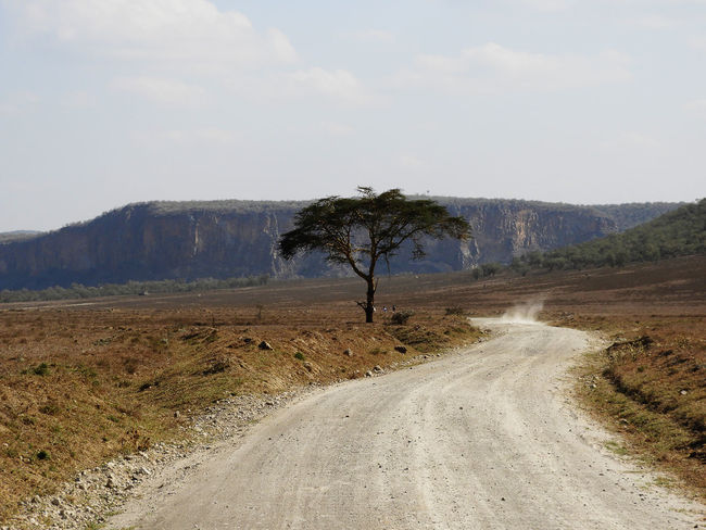 Kenya King Lion Savannah Africa Beauty In Nature Beauty In Nature Cliff View Grass Hell's Gate Hell's Gate National Park Landscape Lonely Tree Mountain Nature No People Outdoors Road Safari Scenics Sky The Way Forward Tranquil Scene Tranquility Tree