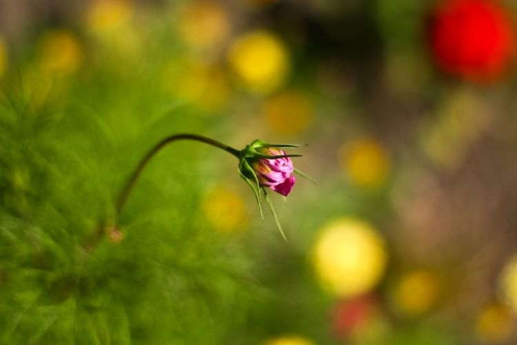 Animal Themes Animals In The Wild Beauty In Nature Close-up Day Flower Flower Head Focus On Foreground Fragility Freshness Insect Nature No People Outdoors Plant