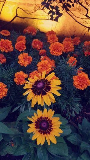 Blossum Orange
