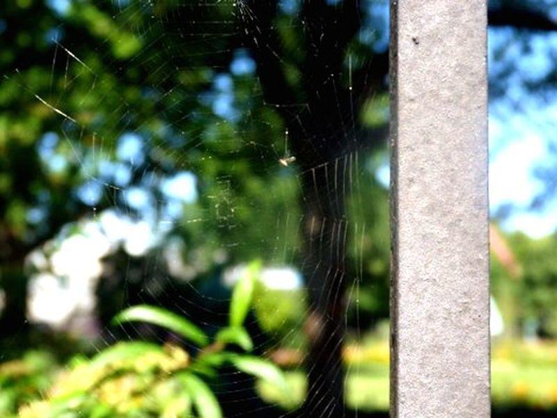 Tela De Araña Araña Spider en la Verja del Parque  Park en Dinamarca Denmark Summer In Denmark