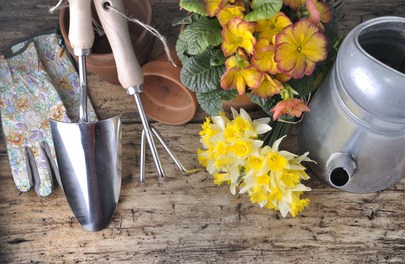 Gardening Flower Flower Head Flower Pot Flowering Plant Freshness Gloves Metal Nature Petal Plant Spring Still Life Table Tools Watering Can Yellow