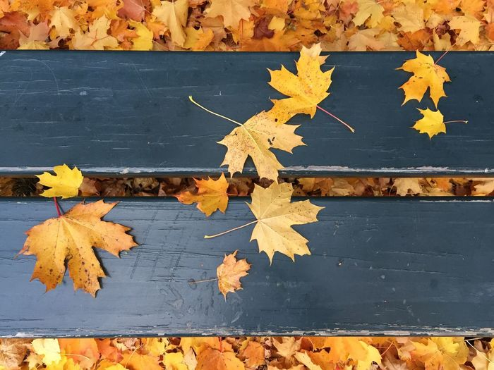 Autumn Leaf Change Maple Leaf Leaves Dry Maple No People Yellow Fallen Nature Lines Leaves On The Bench Contrasting Colors Fragility Backgrounds Outdoors Day The Great Outdoors - 2018 EyeEm Awards