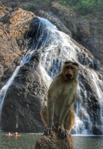 goa Waterfall Naturephotography Naturelovers Portrait Monkey Water Full Length Portrait Cave Geology Canyon Flowing Limestone Cliff Eroded Meerkat Rugged Sandstone