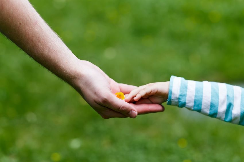 a little child giving a flower to her father. parent's and daughter's hands. family love and happiness concept Adult Bonding Boys Childhood Close-up Day Focus On Foreground Happiness Human Body Part Human Hand Love Love Outdoors Real People Together Togetherness Two People