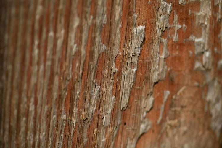 Beautiful Bark Oley Elate Beauty Texture