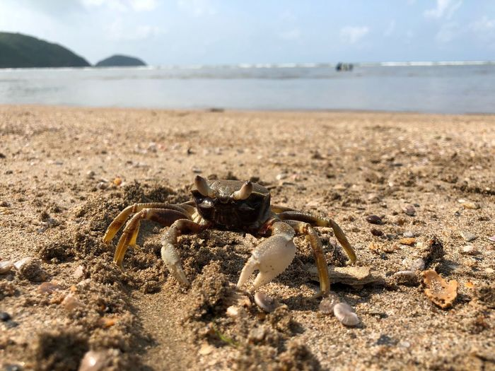 Little Crab Land Beach Sea Sky Nature Sand Day Close-up Animal Wildlife Animal Themes Animal Water Sunlight Crab Animals In The Wild
