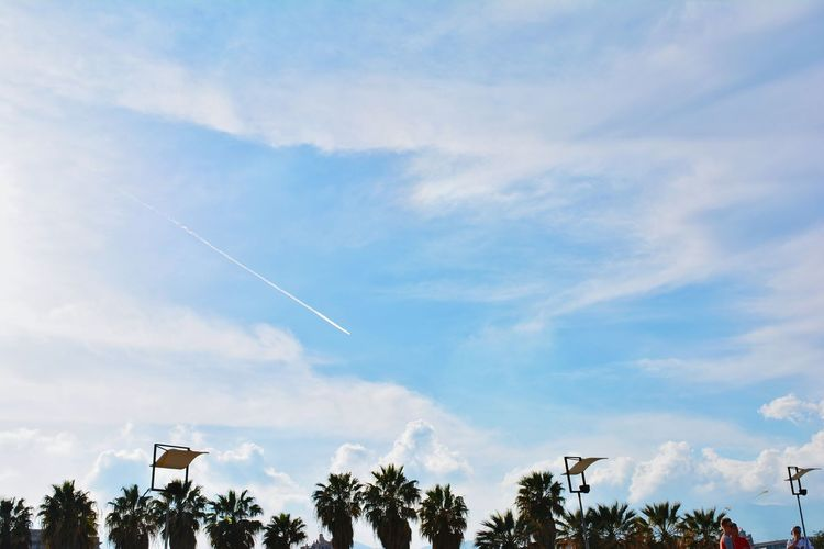 Palms Clouds Cloudscape Park Green Beauty In Nature Scenics Vapor Trail Airplane No People Day Outdoors Blue Flying Sky Tree Airshow Motion Air Vehicle Low Angle View Nature