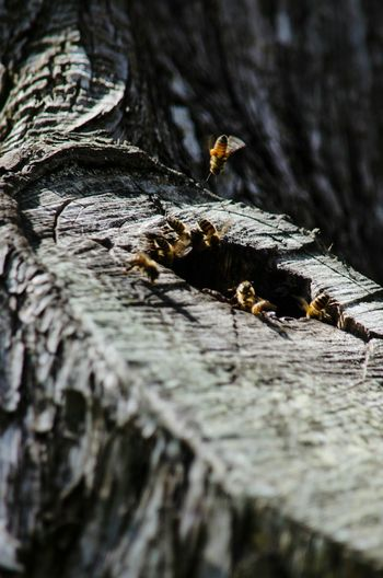 Honeybees Insects In Flight Tree Trunk Branch Outdoors Day Nikon D5100  No People Bee Hive