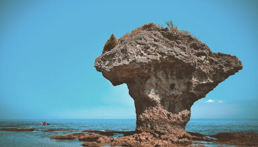 A huge coral