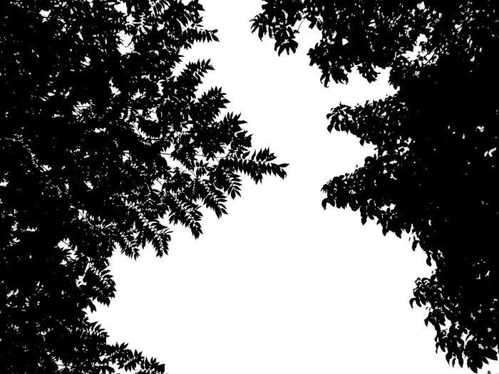 Bnwphotography Bnw Photography Bnw_collection Blanckandwhite Bnw EyeEm Masterclass Mobilephotography Eyeemphoto Week Of Eyeem BestEdits EyeEm Best Shots EyeEm Best Edits EyeEm Gallery Eyeem Philippines A Bird's Eye View Art Monochrome Photography