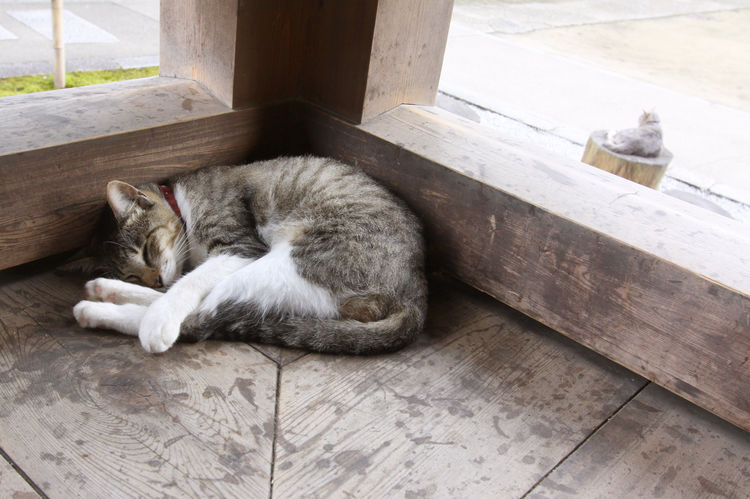 Stray Cat Animal Animal Themes Cat Day Eyes Closed  Mammal No People Relaxation Resting Sleeping
