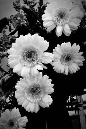 Close-up Flower Flowers Black & White Germini Dianthus Hypericum