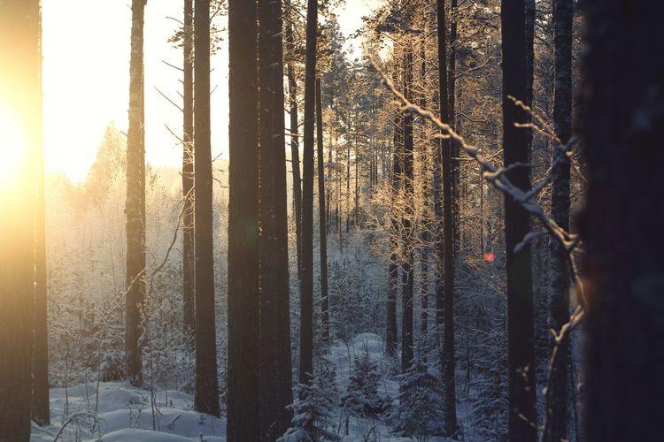 Snow Silence Of