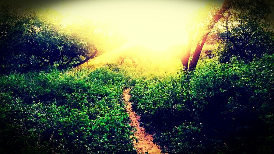 It's my village's jungle photo. Nature Growth Sunlight Plant Beauty In Nature No People Grass Outdoors First Eyeem Photo