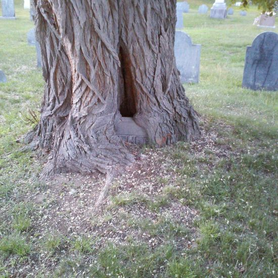 Beauty In Nature Cemetery Close-up Day Field Grass Gravestone Growth Nature No People Outdoors Sky Tree Tree Trunk
