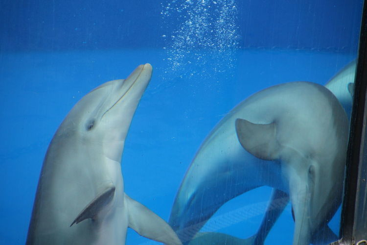 Close-Up Of Dolphins In Fish Tank