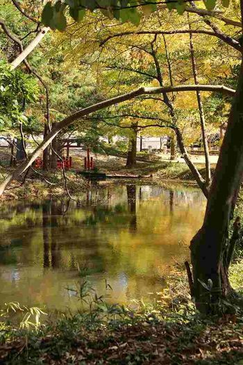 Autumn Japan Beauty In Nature No People Outdoors Tree Water