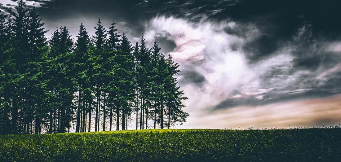 --Enchanted Forest-- Cloud France Landscape_Collection Nature Beauty In Nature Cloud - Sky Field Grass Green Color Growth Landscape Nature No People Outdoors Scenics Sky Tranquil Scene Tranquility Tree