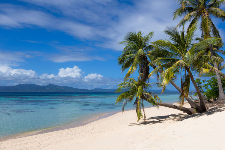 Perfect white sand beach with palm trees in Palawan, Philippines El Nido Island View  Island Living Life's A Beach Paradise On Earth Perfect Day Philippines South Pacific Tropical Paradise White Sand Beach Beach Scene  Coconut Grove Coconut Trees Heaven On Earth Island Hopping Landscape Linapacan Palawan Palm Trees Paradise Beach Perfection Port Barton Travel Photos Turquoise Water Vacation