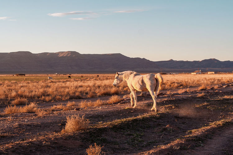 Horse standing on land