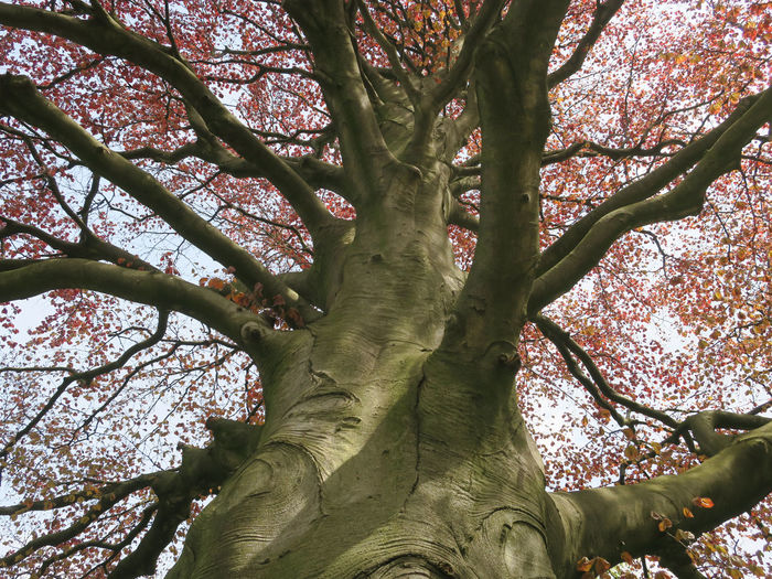 Low angle view of flowering tree