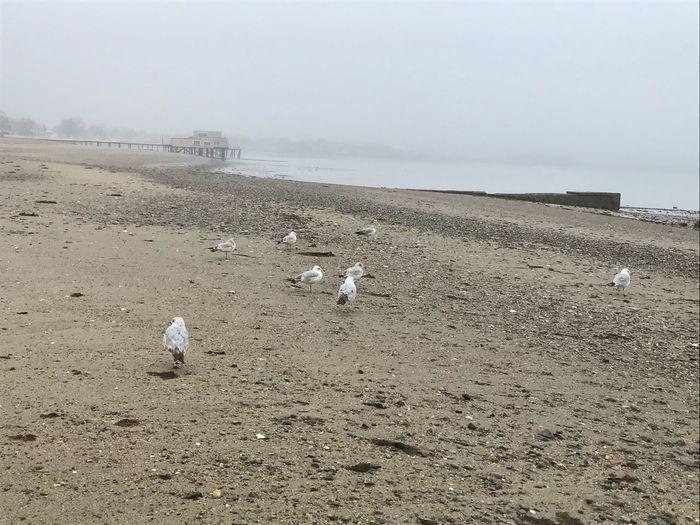 Seaandsand Flock Of Birds Nature Sea