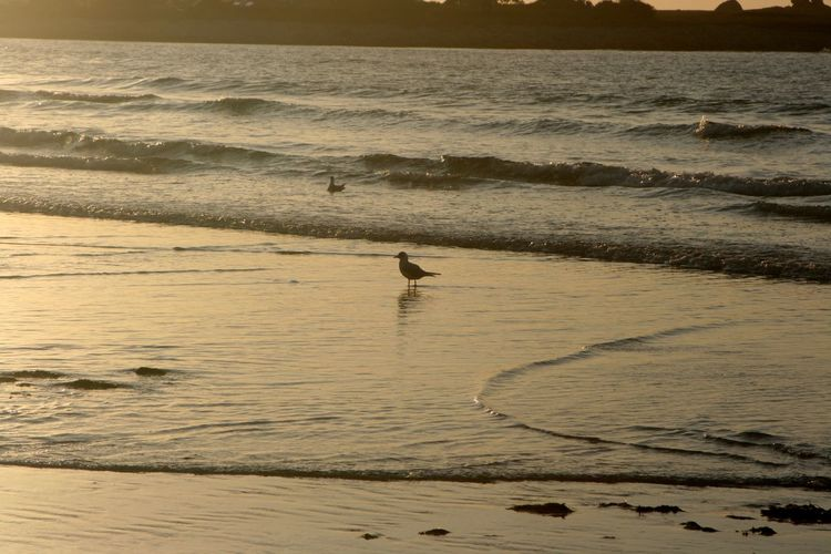 Beach Beauty In Nature Horizon Over Water Scenics Sea Singel Bird Sunset Water Wave