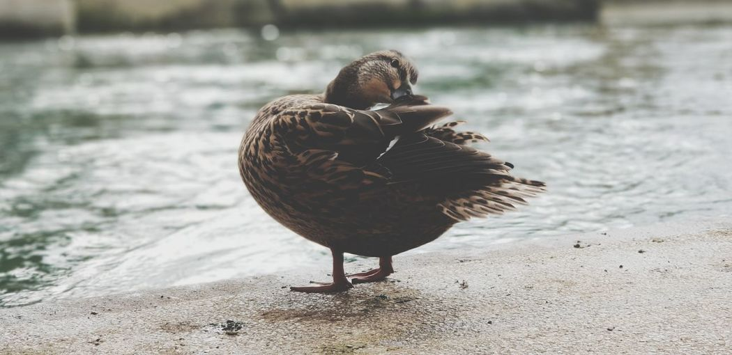 Close-up of a bird on the beach