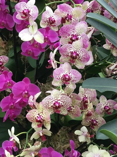 Orchids Flower Pink Color Growth Beauty In Nature Flower Head Petal Plant Nature Fragility No People Day Blooming Freshness Outdoors Close-up