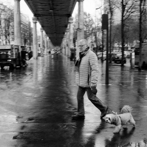 Man walking with dog on street