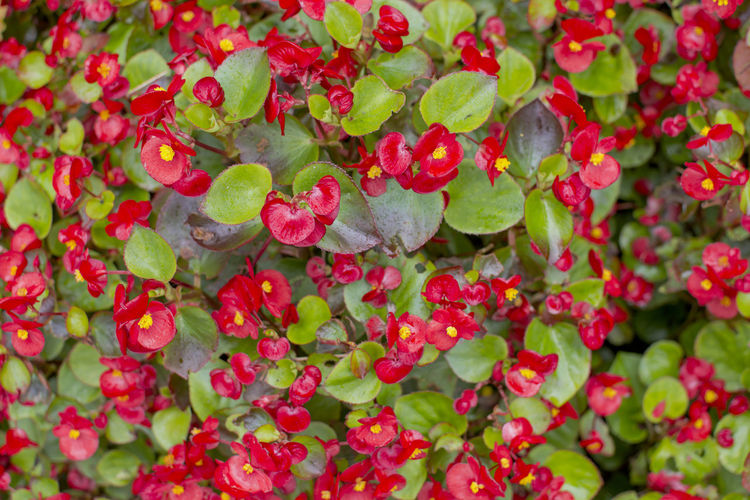 Blooming beautiful red flower garden Freshness Red Full Frame Plant Growth No People Nature Outdoors Red Flower Spring Blossom Plant Petal Growth Gardening Field Green Nature Springtime Farm Wild