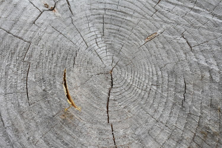 Beautiful Nature Tree Trunk Backgrounds Bark Beauty In Nature Close-up Concentric Cracked Cute Cuted Tree Day Forest Full Frame Grain Gray Grey Macro Nature No People Outdoors Pattern Rings Rough Structure Textured  Tree Tree Ring Tree Stump Tree Trunk Trunk Wood Wood - Material Wood Grain