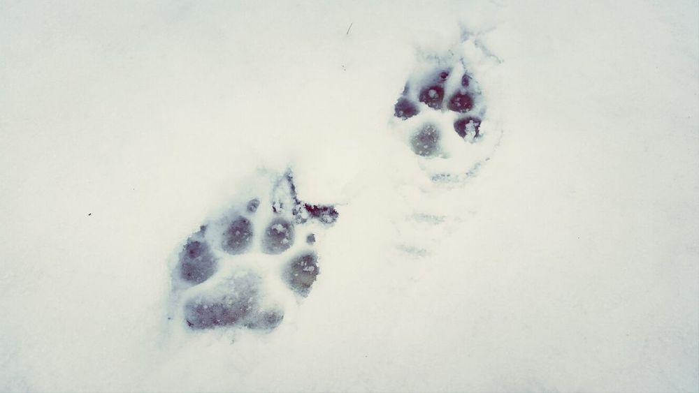 Dog Winter Snow EyeEm Nature Lover