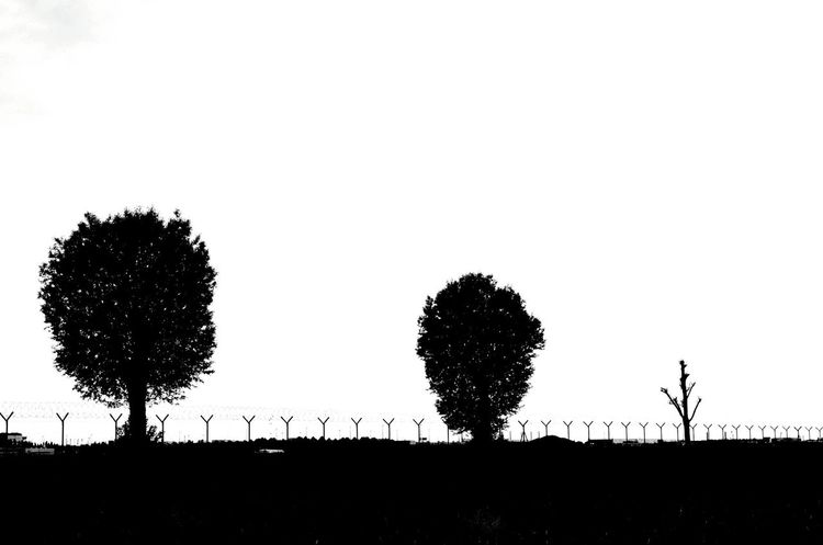 Degeneration Blackandwhite Black And White Black & White Monochrome Tree Silhouette Tree Nature Animals In The Wild Outdoors Sunset Beauty In Nature