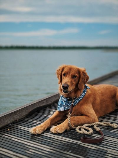 Portrait of dog relaxing on lake