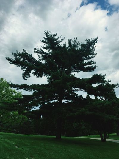 Nature's asterisk. One of our large green friends. The Life Of Trees Tree Silhouette