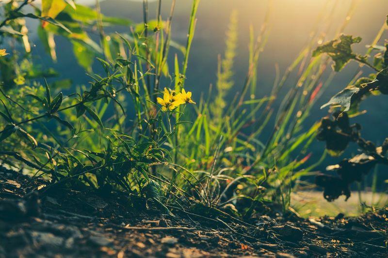 The Week On EyeEm Growth Plant Nature Yellow Flower Sunlight Tranquility EyeEm Nature Lover EyeEm Best Shots EyeEm Gallery EyeEm Art Is Everywhere EyeEm Selects Exceptional Photographs Exceptional Photography