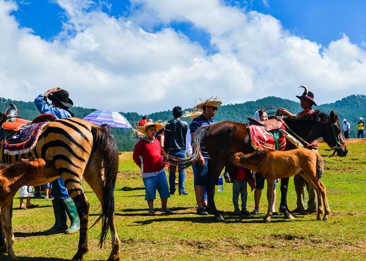 Horse DaLatcity Dalat Nikon Cloud - Sky D7000 Day Domestic Animals Field Grass Horse Horse Racing Livestock Mammal Nature Outdoors Sky Sonjewel Sonjewelphotographer