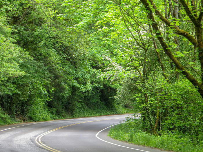 Tight Curve Heading south on Iron Mountain Blvd Country Road Energize Freedom Horizontal Pacific Northwest  Travel Adventure Carefree Curve Escape Forest Road Getaway  Green Color Journey Lush Foliage Mountain Road Nature No People Outdoors Road Scenic Drive The Way Forward Tranquility Winding Road WoodLand