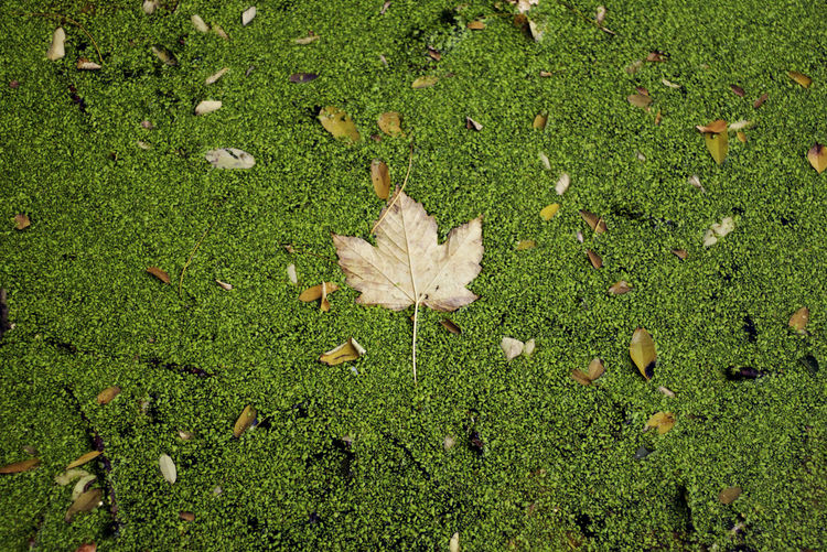 High angle view of dry leaf on grass