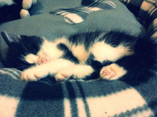 EyeEm Best Shots Cat Sleeping Love My baby Lily. :)