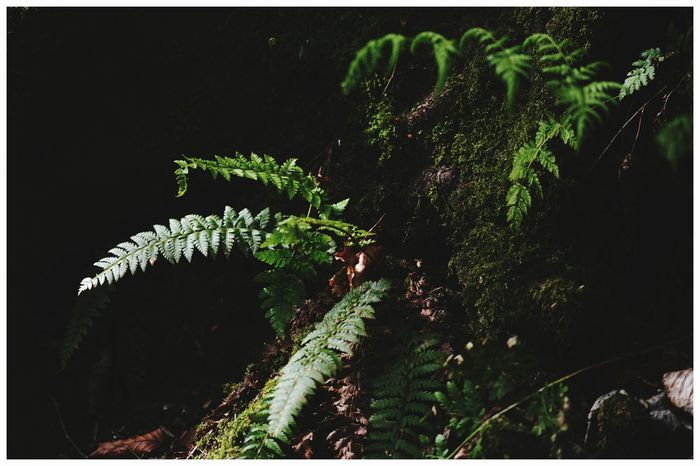Outdoors Tourism Attractions Scenic Beauty Leisure Angus Close-up Black Background Nature Branch Plant The Den Kirriemuir Ferns 🌾