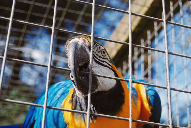 Close-up of bird in cage