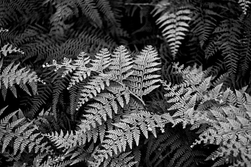 Black And White Bushes Few Forest Forestwalk Natural Pattern Nature New Zealand Outdoors Tranquility