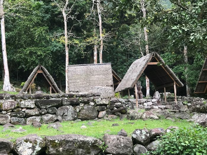 Paepae Marae Paepae Sacred Place French Polynesia Polynésie Française Marquises Marquesas Islands Hiva Oa Architecture Built Structure Plant Tree Day Nature No People Outdoors