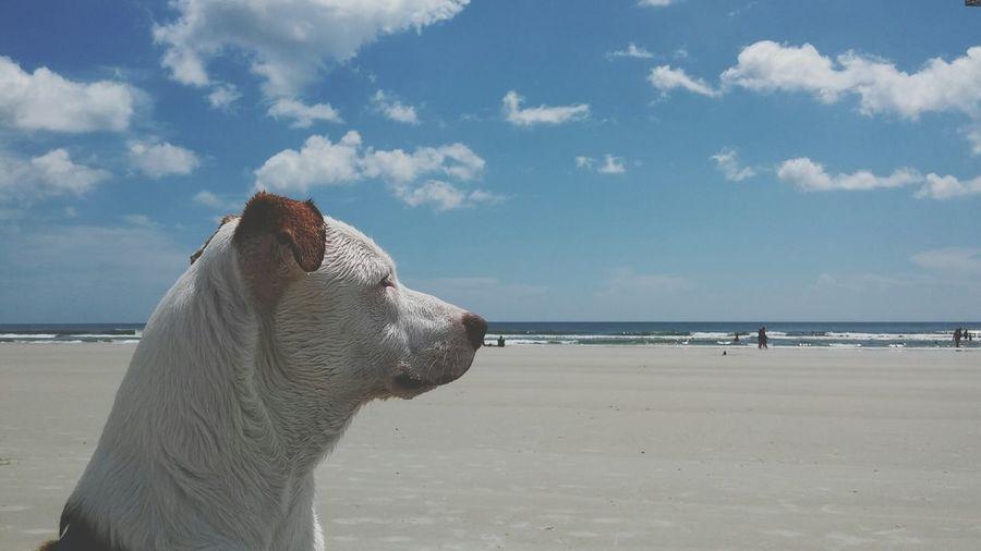 Dog at sandy beach against sky