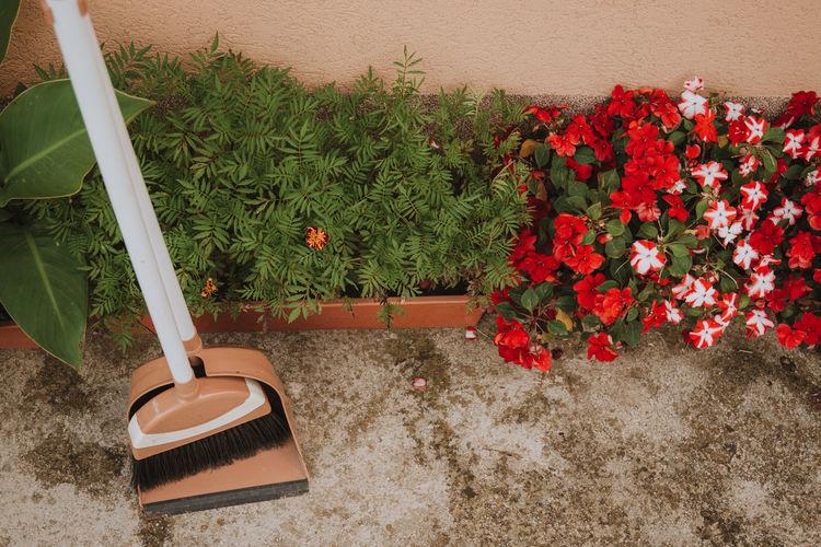Red flowering plants in yard against wall