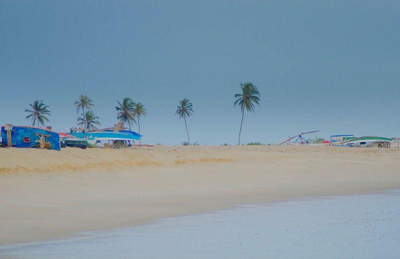 Paradise Beach SãoMigueldoGostoso Land Beach Tree Palm Tree Sand Sky Plant