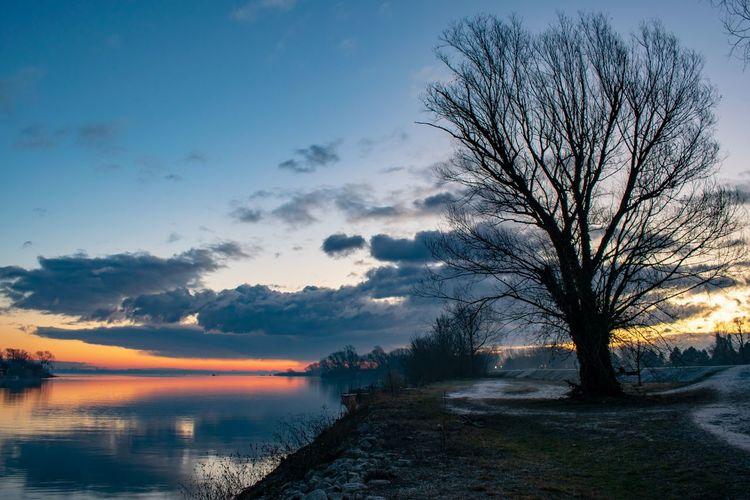 Winter morning on Drava river in Croatia. Tree Beauty Reflection Water Blue Red Sky Horizon Over Water Romantic Sky Atmospheric Mood Sunrise Dramatic Sky Idyllic Moody Sky Dramatic Landscape Atmosphere