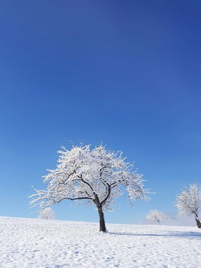 tree snow Snow ❄ Tree Cold Winter Snow Cold Temperature Winter Tree Nature Frozen Blue Outdoors No People Landscape Clear Sky Day Frozen Water Sky Rural Scene Beauty In Nature Pixelated